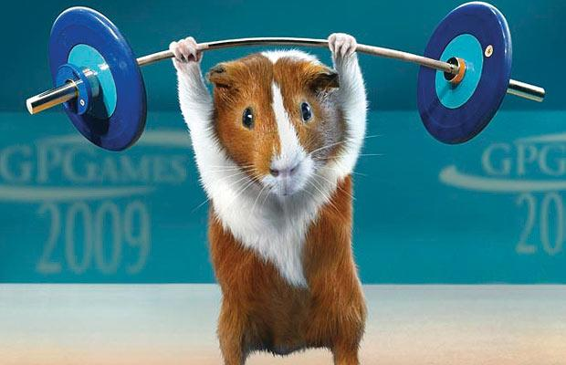 how to train guinea pigs to dance